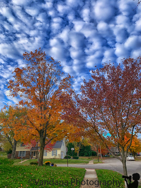 November 17, 2019 - Fall colors still on
