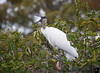 January 14, 2019 - Woodstork call<br /> Happy birthday to K !