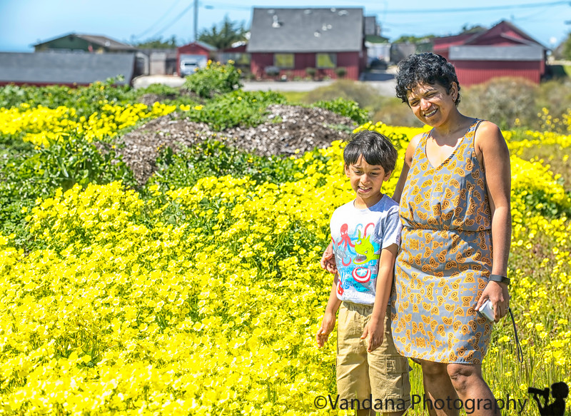 April 9, 2019 - Among the wild mustard flowers