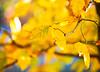 October 23, 2020 - Yellows