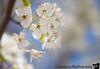 April 29, 2020 - blooms in the neighborhood