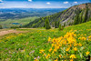 July 21, 2020 - a beautiful hike among wildflowers, great views, Rendezvous Mountain, Jackson Hole, WY