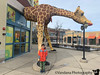 January 28, 2020 - A with Lego Giraffe
