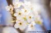 April 25, 2020 - Blooms