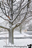 February 29, 2020 - lovely snow on the tree - Happy leap day !