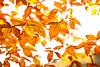October 24, 2020 - Fall colors
