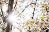April 26, 2020 - light and blooms