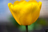 April 21, 2020 - Yellow