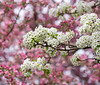 April 22, 2021 - White on Pink