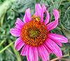 August 9, 2021 - Bee on flower