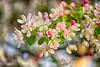 April 28, 2021 - blossoms 9