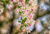 April 29, 2021 - blossoms 10
