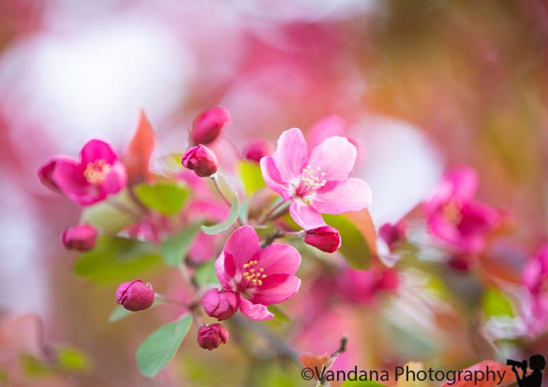 May 1, 2021 - Pink