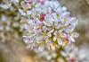 April 25, 2021 - blossoms 9
