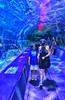 August 20, 2021 - At Ripley Aquarium