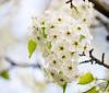 April 12, 2021 - blossoms 5