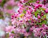 April 11, 2021 - blossoms 4