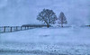 February 25, 2021 - trees in snow