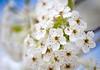 April 16, 2021 - blossoms 7