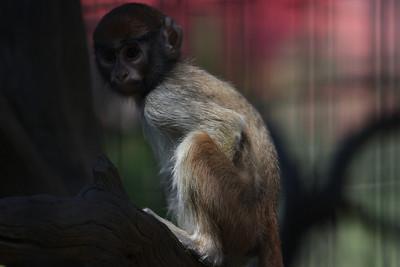 Monkey child at Safari West (unedited)