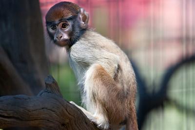 Monkey child at Safari West editing step 7