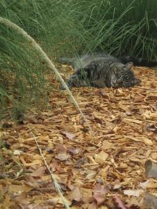 """Original cat """"Tiger"""" photo (unedited)"""