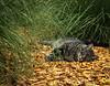 """Tiger Dreaming in the Jungle"" cat postprocessing"