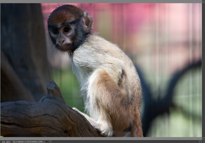 Monkey child at Safari West editing step 3