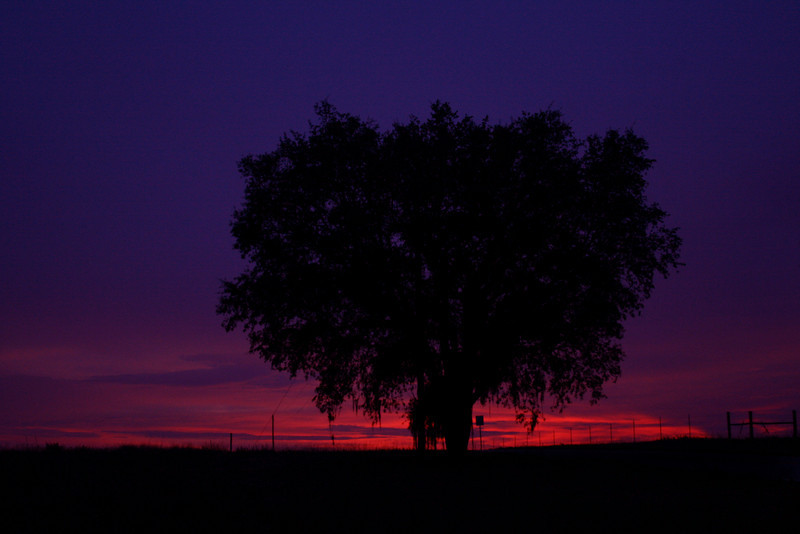 June 21, 2010: Today's photo is of a tree that I mentioned before. This tree is on a back road a little ways down from my apartment. This was taken after another rainy day here in Orlando just after sunset.