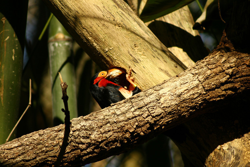 March 4, 2010: Today's photo is a bird that I found on the Pangani Forest Trail at Animal Kingdom last week.