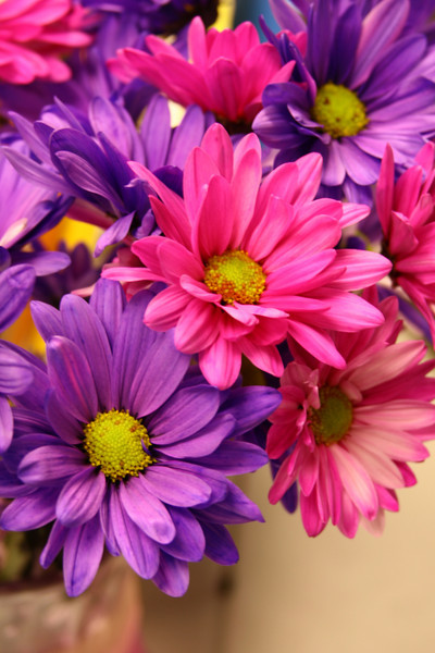 October 8, 2009:  Here is a photo of some flowers that someone I work with had received.