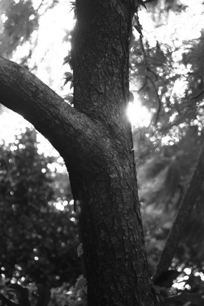 November 11, 2009: While I'm on the black and white kick – here's another.  This time its from Discovery Island on the backside of the Tree of Life at Animal Kingdom.