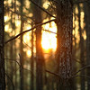 November 30, 2010: Here's another photo from my trip to Georgia. It's another sunset photo, this time through the forest.