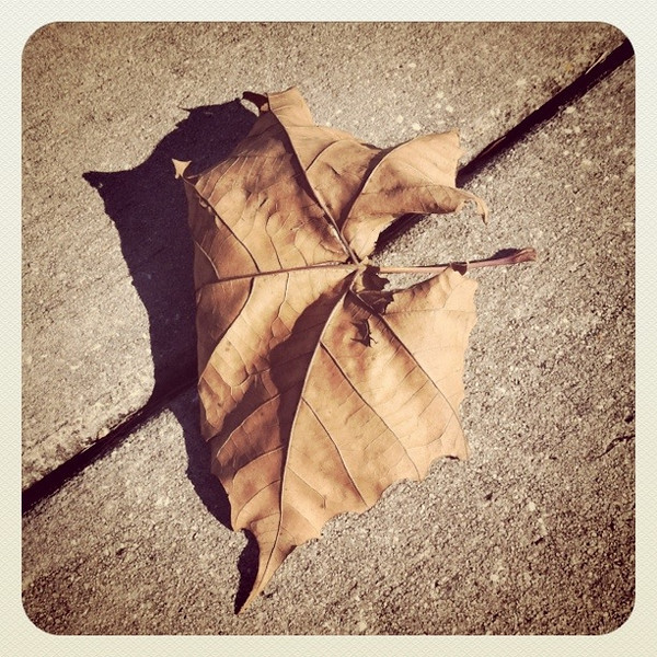 January 25, 2011: This photo was taken with my phone and then I used the Instagram app to apply a retro effect. This is a maple leaf I found on a sidewalk.