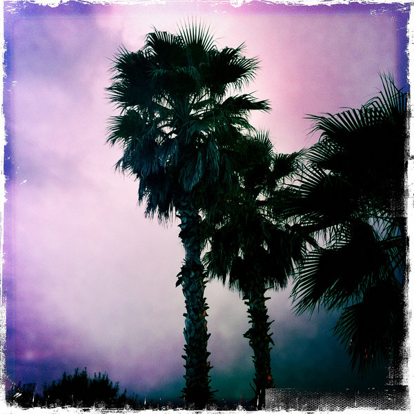 September 16, 2010: Here's another photo that I got with an iPhone app. This was taken just before a crazy storm last week, and it really was just about this purple.<br />  <br /> Oh, and it's my 400th Photo du Jour! =)