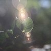 January 12, 2010: Today's photo is from back in November.  I wanted to play around with lens flare a bit with this shot.