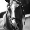 August 12, 2010: Here's a black and white photo of a horse.