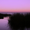 October 13, 2010: Here's another photo from Lake Apopka. This was after sunset as I was leaving.