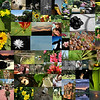 July 20, 2009:  Today is my ONE HUNDREDTH PHOTO Du JOUR!  Today's photo is a collage of almost all of the photos that I have sent out over the past three and a half months.  I have to thank Marie for making me start my own photo of the day.  I also thank all of you for your positive feedback and your great critiques!<br /> <br /> As part of this special edition, I have decided to join SmugMug.com to host my photos!  You can now see all 107 photos in my Photo du Jour.  So, if you missed one or two, or you wanted to buy a few, you can now visit me at brianahicks.smugmug.com or head right over to the Photo du Jour album.<br /> <br /> Here's to hundreds of more photos to come!  If you ever forward these, or know someone who would like to receive my Photo du Jour, just let me know and I'll add them to my list.  :D