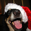 December 17, 2010: I won't be sending any photos next week since I will be out of town (I've found it's pretty darn difficult to send them while I'm away). So, here is a Christmas photo from my dog Xena. I was able to snap this photo just before she kicked the Santa hat right back off. Have a Merry Christmas! See you all in a week!