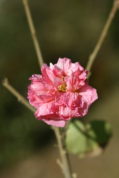 November 26, 2010: Here's a photo of a flower.