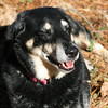 January 5, 2011: I caught a photo of my dog pre-sneeze. She's the best with funny faces!