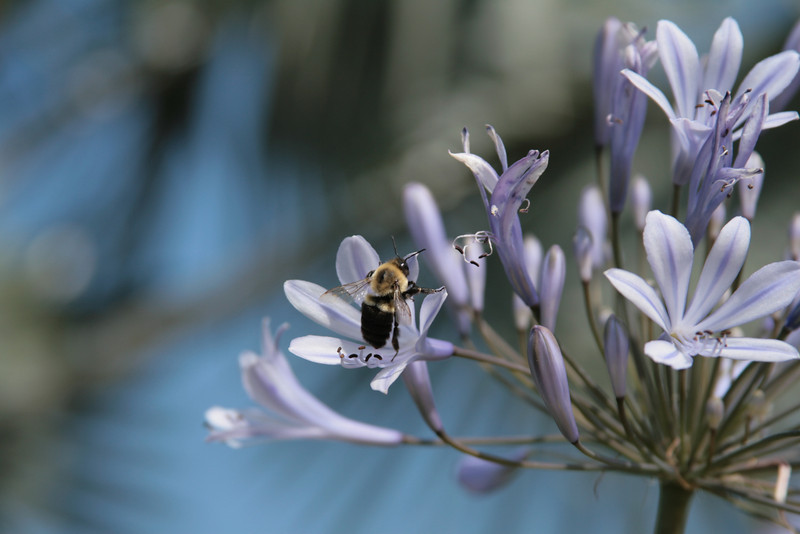 January 22, 2010: I end my spring week with the busy little buzzers that get all these flowers pollinated.