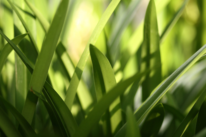July 27, 2010: This is a photo of a plant, but in this photo it looks like a macro photo of grass. I really like this photo, and it's currently my wallpaper.