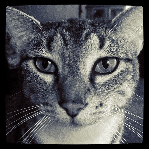 December 1, 2010: I took today's photo of my brother's cat Scooter. I took this with an app called Instagram on the iPhone.