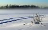 January 9, 2012.  Fog on the lake