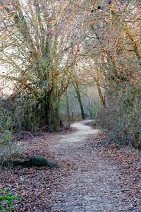Feb 4: Trail at Cosumnes River Preserve.