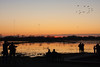 Feb 4: Waiting for the Sandhill Cranes to come in for the evening. Cosumnes River Preserve.
