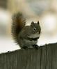 January 12, 2013.  Squirrel