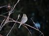 bird-natural